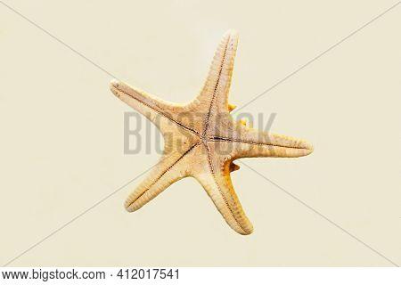 The Yellow-cream Starfish (latin Protoreaster Nodosus) Is Isolated On A White Background. Paleontolo