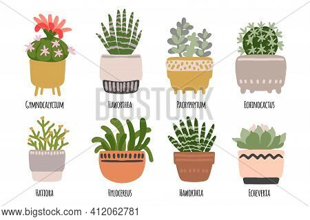 Cacti And Succulents. Indoor Plants And Flowers In Pots. Landscaping At Home. Decor For The Apartmen