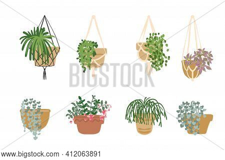 Hanging Flower Pots With Flowers And Plants. Macrame, Modern Home Decor. Cacti And Succulents
