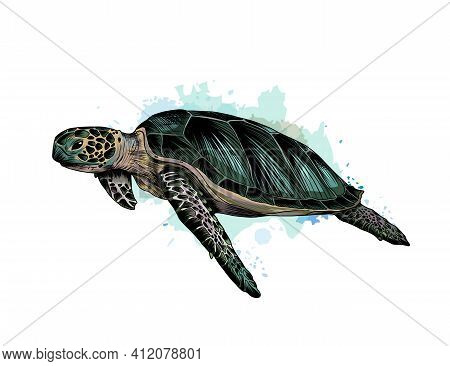 Sea Turtle From A Splash Of Watercolor, Colored Drawing, Realistic