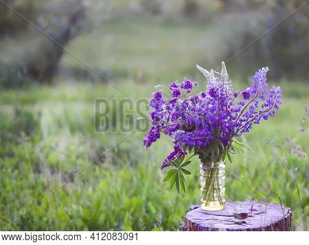 Bouquet Of Summer Flowers Outdoors. Large-leaved Or Bigleaf Lupine Flowers. Lupinus Polyphyllus Plan