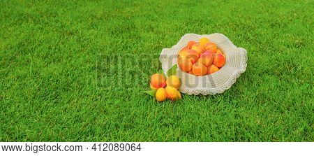 Banner Freshly Harvested Apricots Fruit On Green Grass Background. Bunch Of Ripe Organic Apricots Ba