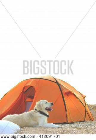The Dog Is Lying Near Tent. Camping Tent In Wilderness By The Seaside. Tent. Dog. Golden Retriever G