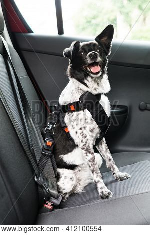 Dog With Safety Seatbelt In Car Seat
