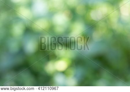 Abstract Bokeh Background, Refocus Blurred Background, Christmas Bokeh Light, Light Bokeh Background