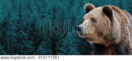 Brown Bear Against The Background Of The Siberian Taiga.