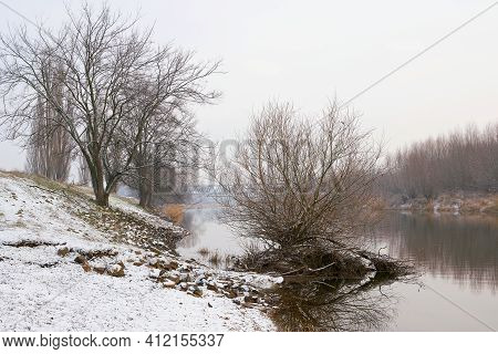 Trees On The River Alte Elbe Near Magdeburg On A Winter Day