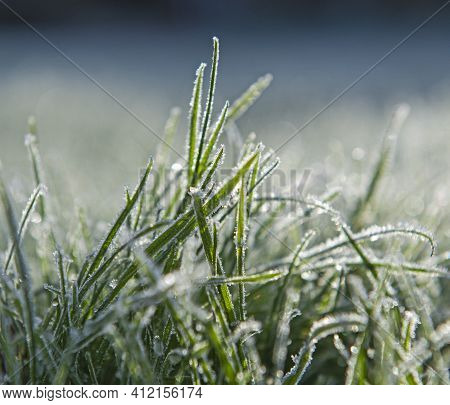 Closeup Detail Of Grass In Garden Covered With Hoar Frost Ice During Winter