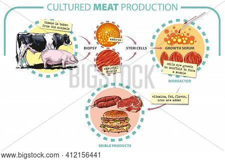 Vector Illustration. Cultured Lab-grown Meat Infographics. Synthetic In Vitro Food Concept. Biotechn