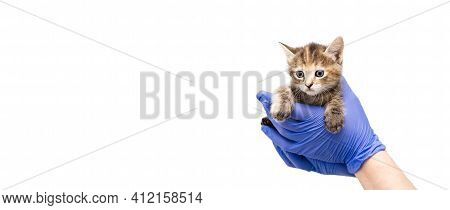 Checkup And Treatment Of Small Striped Kitten At Veterinarian Visit In Veterinary Clinic. Cat In Doc