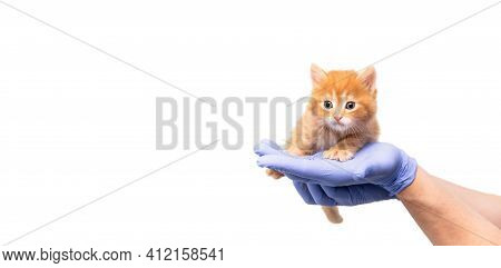 Checkup And Treatment Of Small Ginger Kitten At Veterinarian Visit In Veterinary Clinic. Cat In Doct