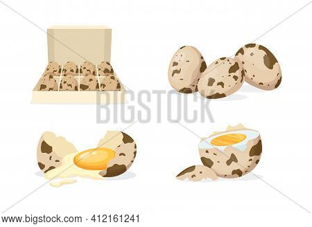 Fresh And Boiled Eggs. Quail Broken Eggs With Cracked Eggshell And Yolks, In Cardboard Box, Egg Half