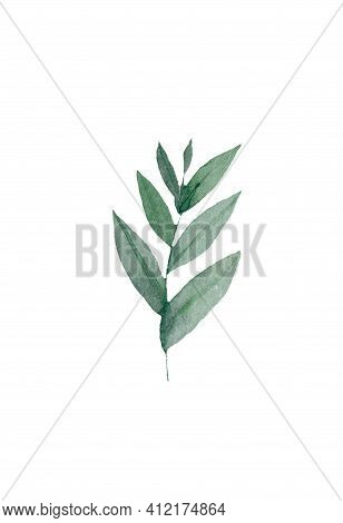 Eucalyptus Seeded, Blue Agonis Thyme, Asparagus Berry Designer Art Watercolor Foliage Natural Branch