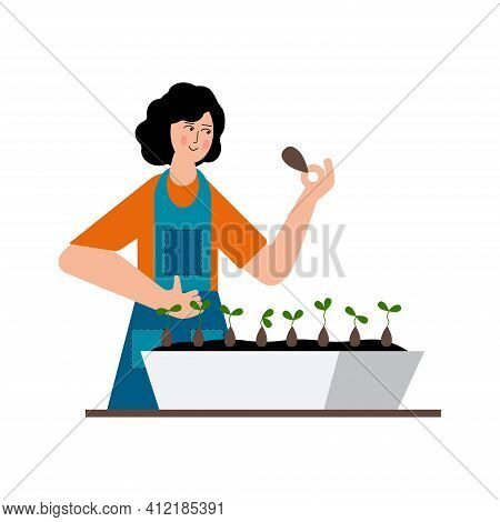 The Girl Is Planting Seeds For Seedlings. Home Garden. The Seeds Sprouted At Home.