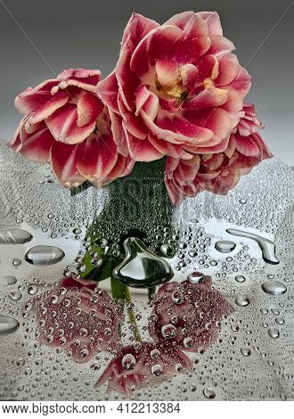 Three Terry Motley Pink White Tulips With Water Drops And Reflection On Mirror Surface. Artistic Ima