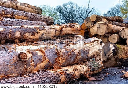 Horizontal Shot Of Harvested Trees In A Lumber Yard.  This Is A Revised Image.