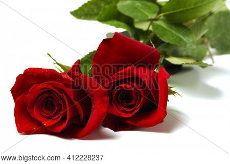 two red roses lying on a white surface