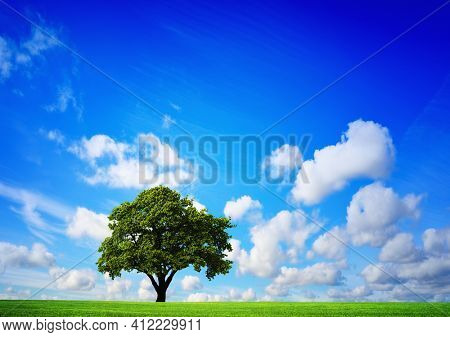 A scenic view of a field of green grass with a lonely tree