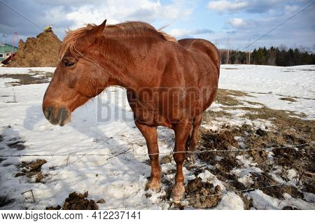 Horse In Winter Standing In The Snow Farm Animal Ranch Enclosure