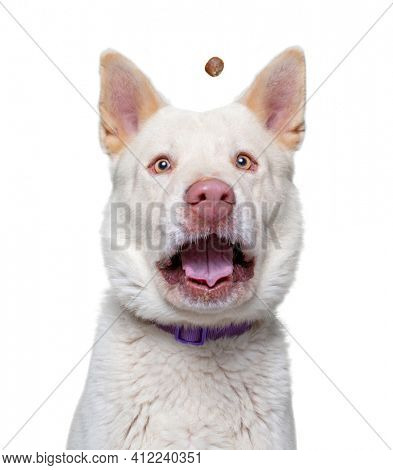 cute dog studio shot on an isolated white background