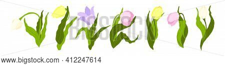 Tulips Collection. Vector Hand Drawn Set Of Colorful Tulips Flowers Isolated On White Background. Wi