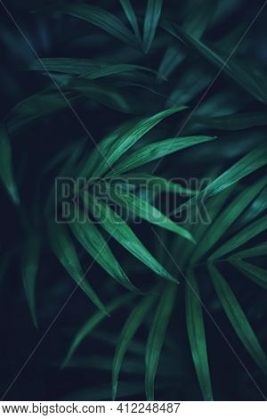 Exotic Palm Tree Leaves, Green Nature And Summer Holiday Closeup