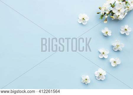 Spring Border Background With Beautiful White Flowering Branches. Blue Background, Bloom Delicate Fl