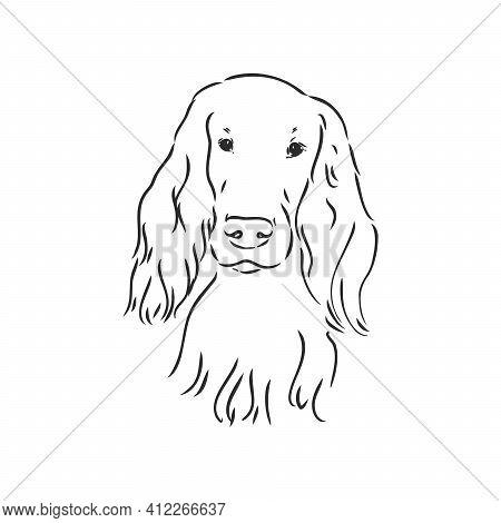 Dog Hand Drawn. English Setter. Vector Illustration Isolated
