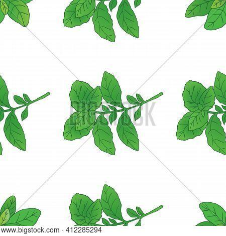 Vector Graphic Illustration Basilic Plant Seamless Pattern-04