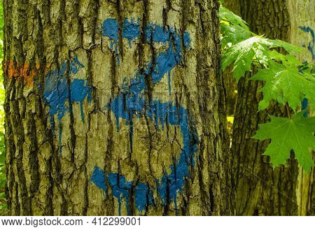 Tree Bark Painted With Number Three And An Arrow. Hiking Marking On A Tree In The Woods. Number 3 Dr