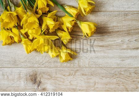 Yellow Narcissus Trumpet,daffodil,(narcissus Pseudonarciss ),bell-shaped Flower,macro,long Leaves,or