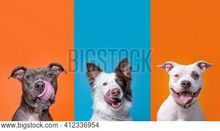 studio shot of shelter dogs on an isolated background
