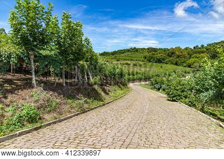 Roads Around Vineyards, Bento Goncalves, Rio Grande Do Sul, Brazil