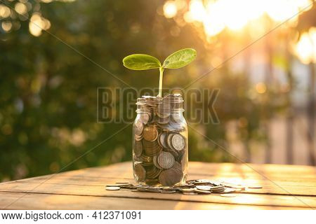 Growing Money, Business Finance And Savings Money Invest , Balance Savings And Investment, Plant Gro