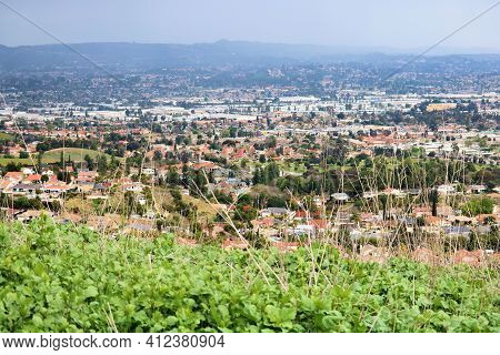 Lush Plants On A Hillside At A Rural Field Overlooking The Urban Sprawl Of The City Taken In The Pue