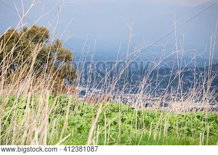 Lush Grasslands Besides A Eucalyptus Grove Overlooking The Urban Sprawl At The City Taken On A Field