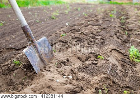 Garden Spade In Black Earth Soil. Farming, Gardening, Agriculture. Worker Digs The Black Soil With S
