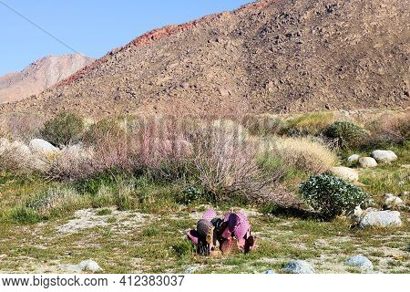 Arid Pasture With Chaparral And Cacti Plants On A Windswept Plain Surrounded By Barren Mountains Tak