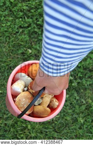 Bucket Full Of Edible Mushrooms In The Hand Of A Mushroom Picker