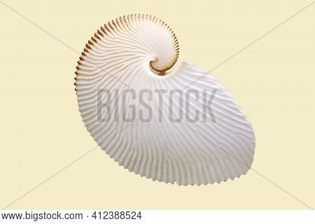 Argonaut Shell (latin: Argonauta Argo L.) Is A White Mother-of-pearl Color Isolated On A White Backg