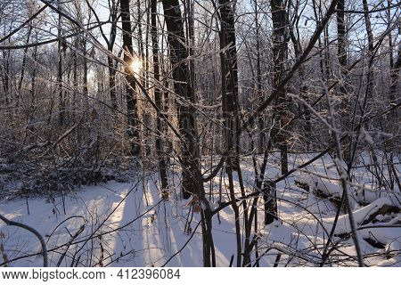 Winter Landscape Of Forest With The Sun Shining Behind The Trees