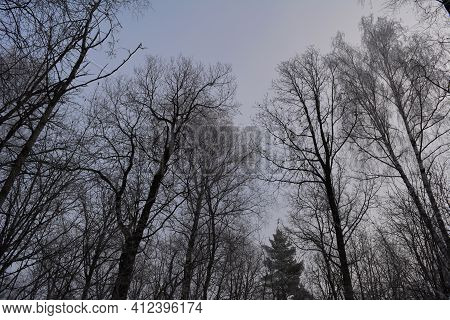 Picturesque Winter Scene In Forest With Trees On The Background Of Sky