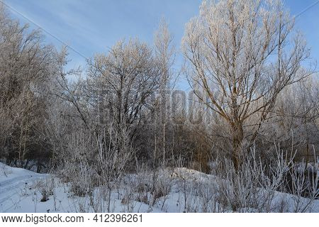 Wonderful Winter Landscape With Trees Covered By Hoarfrost.