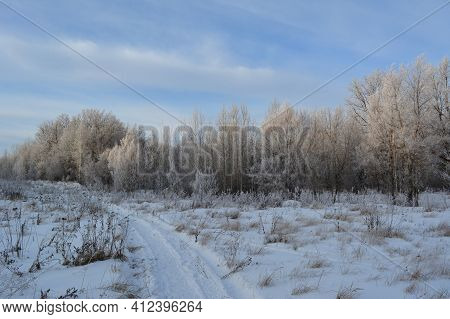 Picturesque Winter Landscape. Walking Path Through Snowy Field With Dry Herbs To Forest With Trees I