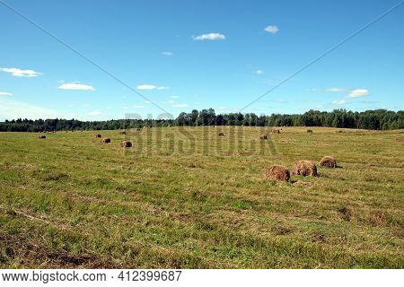 Beautiful rural landscape with long summer field at the edge of the forest with many rolled dry hay on bright sunny summer day view