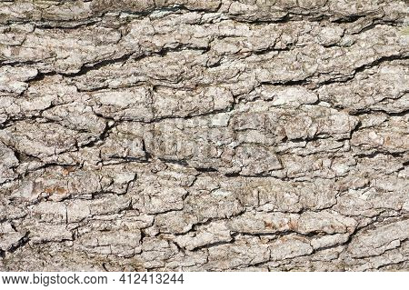 Oak Bark Texture. Tree Bark Background. Forest Trunk Pattern. Brown Wood Pattern. Natural Tree Bark