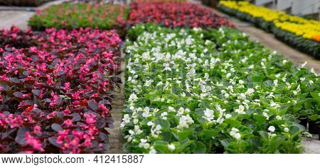 Flower Plantations In Smart Modern Greenhouse, Sales And Business Of Plants