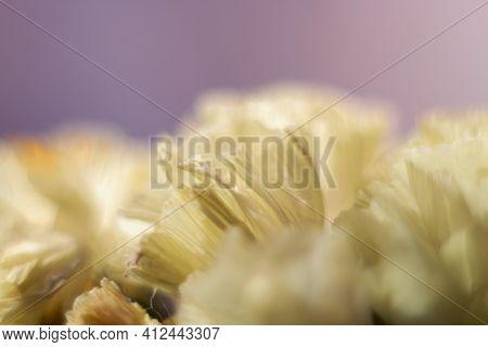 Statice White Limonium.\nlimonium Sinuatum Macro. Light Limonium Flowers Close-up At Shallow Depth O