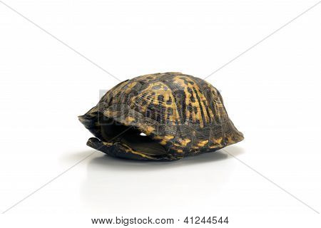 Empty Turtle Shell Isolated On White