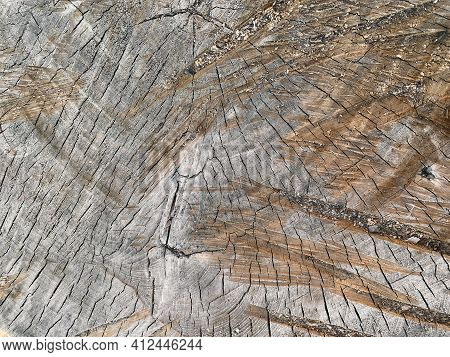 Closeup Of A Cross Section Of Tree Trunk. Cross Sectional Image Of Tree Trunk With Pattern Created F